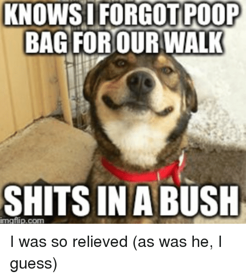 Poop, Guess, and Advice Animals: KNOWS I FORGOT POOP  BAG FOR OUR WALK  SHITS IN A BUSH I was so relieved (as was he, I guess)