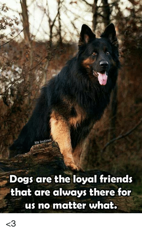 Dogs, Friends, and Memes: Ko Instinct  Dogs are the loyal friends  that are always there for  us no matter what. <3