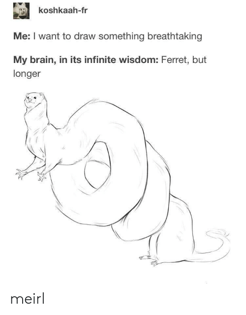 Brain, Ferret, and Wisdom: koshkaah-fr  Me: I want to draw something breathtaking  My brain, in its infinite wisdom: Ferret, but  longer meirl