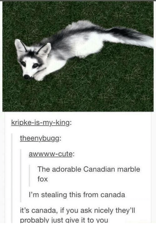 Cute, Canada, and Canadian: kripke-is-my-king:  theenybugg:  awwwW-cute:  The adorable Canadian marble  fox  fox  I'm stealing this from canada  it's canada, if you ask nicely they'll  probably just give it to you