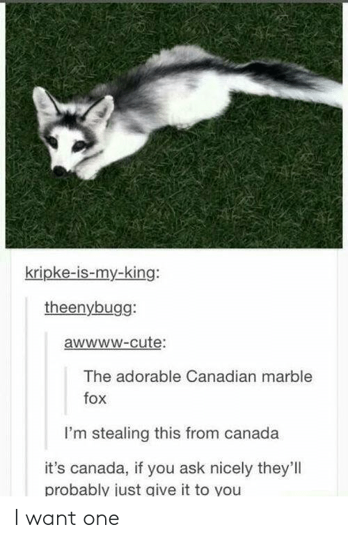 Cute, Canada, and Canadian: kripke-is-my-king:  theenybugg:  awwwW-cute:  The adorable Canadian marble  fox  I'm stealing this from canada  it's canada, if you ask nicely they'll  probably just give it to you I want one
