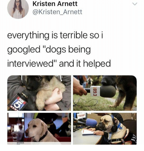 "Dogs, Memes, and 🤖: Kristen Arnett  @Kristen_Arnett  everything is terrible so i  googled ""dogs being  interviewed"" and it helped  BOUNGE"