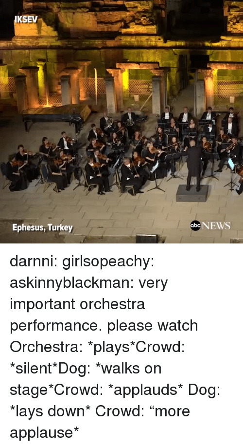 "Lay's, News, and Tumblr: KSEV  Ephesus, Turkey  abe NEWS darnni:  girlsopeachy:  askinnyblackman:  very important orchestra performance. please watch  Orchestra: *plays*Crowd: *silent*Dog: *walks on stage*Crowd: *applauds*   Dog: *lays down* Crowd: ""more applause*"