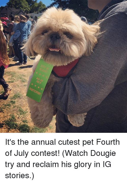 Memes, Watch, and 🤖: kth OP  ULY  PARTICIPANT It's the annual cutest pet Fourth of July contest! (Watch Dougie try and reclaim his glory in IG stories.)