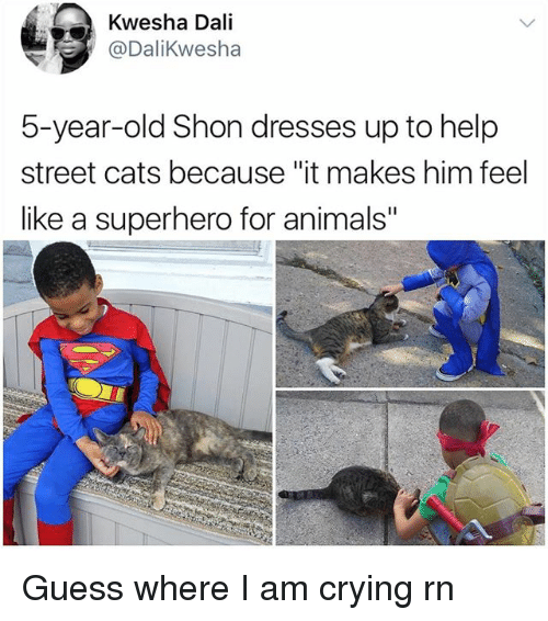 """Animals, Cats, and Crying: Kwesha Dali  @DaliKwesha  5-year-old Shon dresses up to help  street cats because """"it makes him feel  like a superhero for animals"""" Guess where I am crying rn"""