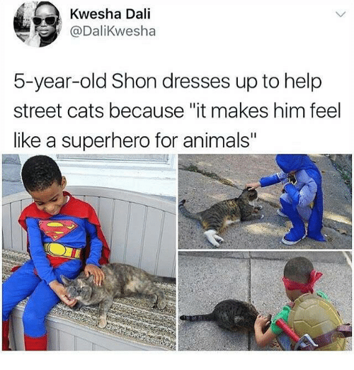 "Cats, Dank, and Superhero: Kwesha Dali  @DaliKwesha  5-year-old Shon dresses up to help  street cats because ""it makes him feel  like a superhero for animal"