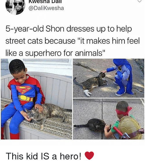 "Animals, Cats, and Memes: Kwesha Dall  @Dalikwesha  5-year-old Shon dresses up to help  street cats because ""it makes him feel  like a superhero for animals"" This kid IS a hero! ❤️"