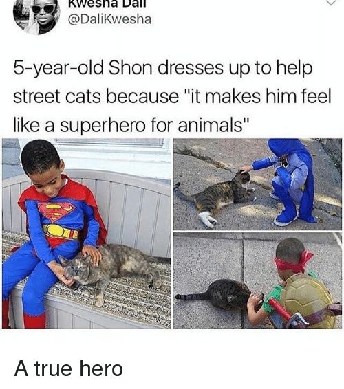 "Animals, Cats, and Memes: Kwesha Dall  @Dalikwesha  5-year-old Shon dresses up to help  street cats because ""it makes him feel  like a superhero for animals"" A true hero"