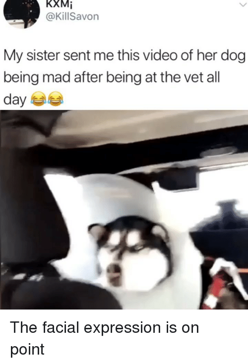Memes, Video, and Mad: KXMİ  @KillSavon  My sister sent me this video of her dog  being mad after being at the vet all The facial expression is on point