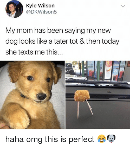 Omg, Today, and Relatable: Kyle Wilson  @DKWilson5  My mom has been saying my new  dog looks like a tater tot & then today  she texts me this...  811 haha omg this is perfect 😂🐶
