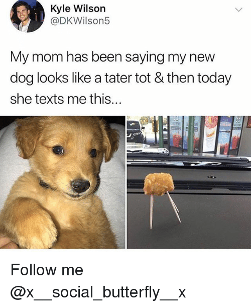 Memes, Butterfly, and Today: Kyle Wilson  @DKWilson5  My mom has been saying my new  dog looks like a tater tot & then today  she texts me this... Follow me @x__social_butterfly__x