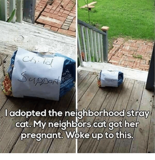 Dank, Pregnant, and Neighbors: l adopted the neighborhood stray  cat. My neighbors cat got her  pregnant. Woke up to this