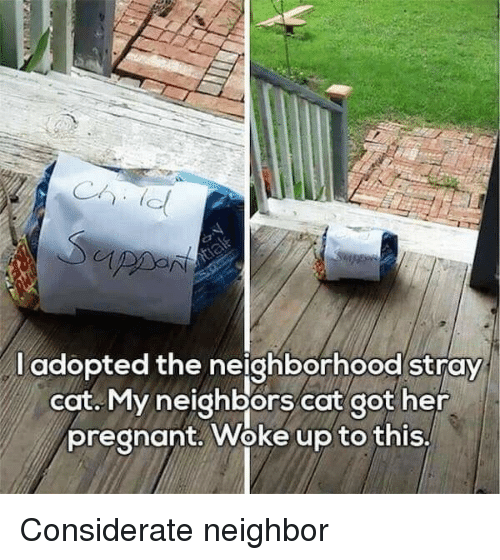 Pregnant, Neighbors, and Got: l adopted the neighborhood stray  cat. My neighbors cat got her  pregnant. Woke up to this, Considerate neighbor