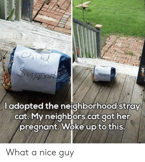 Pregnant, Neighbors, and Nice: l adopted the neighborhood stray  cot. My neighbors cat got her  pregnant. Woke up to this What a nice guy