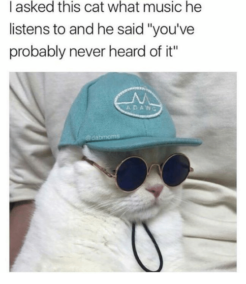 """Music, Never, and Cat: l asked this cat what music he  listens to and he said """"you've  probably never heard of it""""  A DAWG  @dabmoms"""