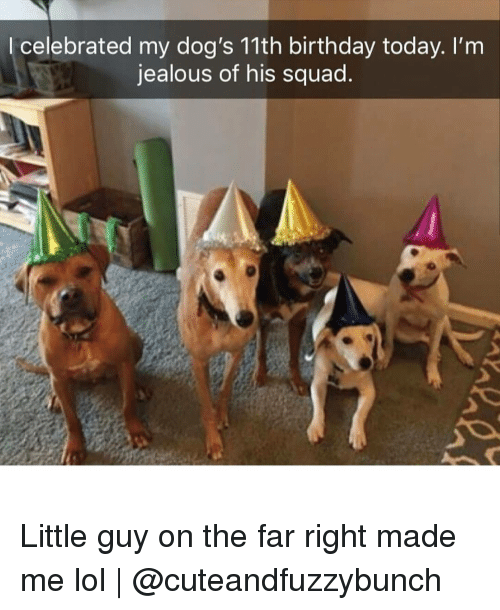 Birthday, Dogs, and Jealous: l celebrated my dog's 11th birthday today. I'm  jealous of his squad Little guy on the far right made me lol | @cuteandfuzzybunch