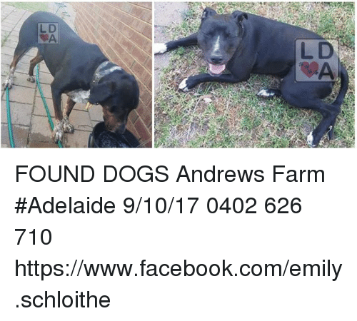 0bf6114541b73 L D FOUND DOGS Andrews Farm  Adelaide 91017 0402 626 710 ...