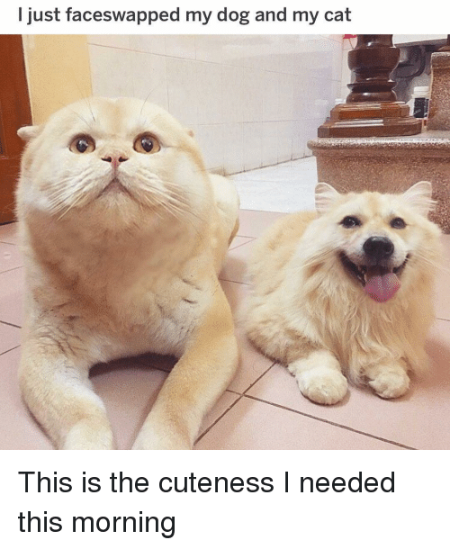 Funny, Dog, and Cat: l just faceswapped my dog and my cat This is the cuteness I needed this morning