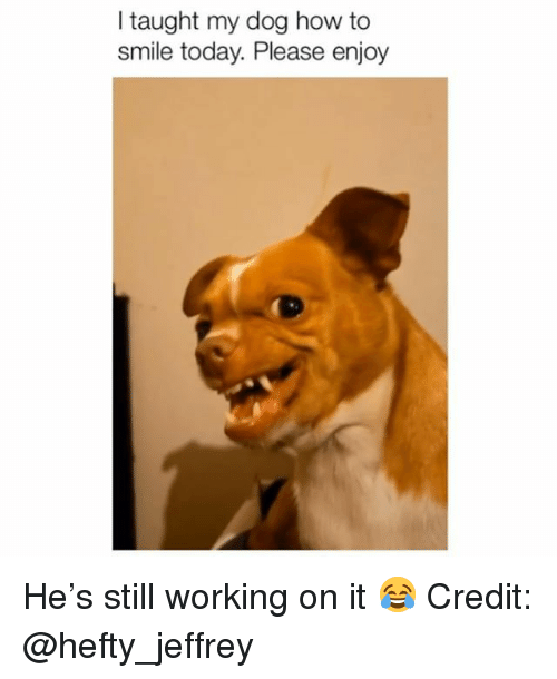 Memes, How To, and Smile: l taught my dog how to  smile today. Please enjoy He's still working on it 😂 Credit: @hefty_jeffrey