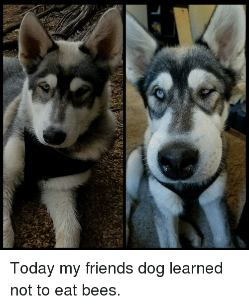 How To Be Friends With A Dog