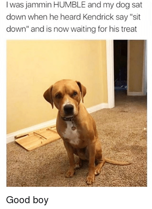 "Memes, Good, and Humble: l was jammin HUMBLE and my dog sat  down when he heard Kendrick say ""sit  down"" and is now waiting for his treat Good boy"