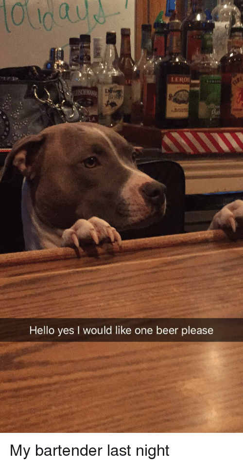 Beer, Hello, and Yes: LA  Hello yes I would like one beer please My bartender last night