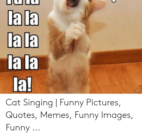 La La 1a! Cat Singing | Funny Pictures Quotes Memes Funny ...