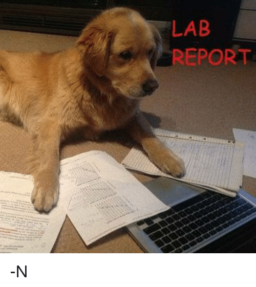 Do my lab report for me