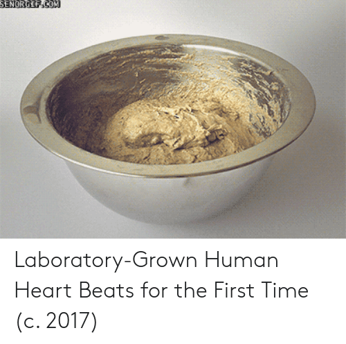Beats, Heart, and Time: Laboratory-Grown Human Heart Beats for the First Time (c. 2017)