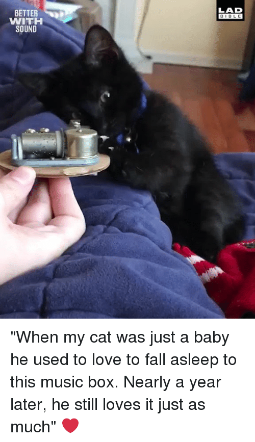 """Dank, Fall, and Love: LAD  BIBL E  BETTER  WITH  SOUND """"When my cat was just a baby he used to love to fall asleep to this music box. Nearly a year later, he still loves it just as much"""" ❤️"""