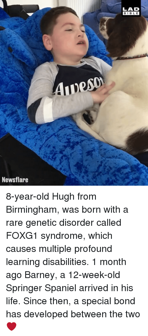 Barney, Life, and Memes: LAD  BIBL E  Newsflare 8-year-old Hugh from Birmingham, was born with a rare genetic disorder called FOXG1 syndrome, which causes multiple profound learning disabilities. 1 month ago Barney, a 12-week-old Springer Spaniel arrived in his life. Since then, a special bond has developed between the two ❤️