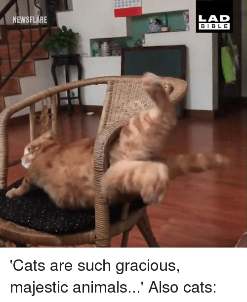 Animals, Cats, and Dank: LAD  BIBL E  NEWSFLARE 'Cats are such gracious, majestic animals...'  Also cats: