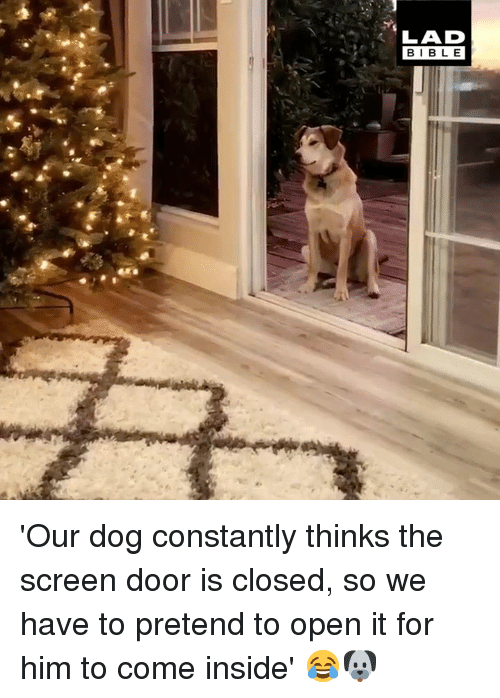 Dank, 🤖, and Dog: LAD  BIBL E 'Our dog constantly thinks the screen door is closed, so we have to pretend to open it for him to come inside' 😂🐶
