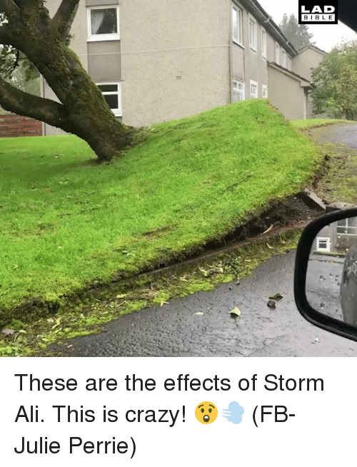Ali, Crazy, and Memes: LAD  BIBL E These are the effects of Storm Ali. This is crazy! 😲💨 (FB-Julie Perrie)
