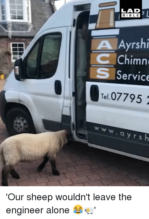 Being Alone, Memes, and Bible: LAD  BIBLE  A Ayrshi  CChimn  Service  Tel.07795  www.ayr 'Our sheep wouldn't leave the engineer alone 😂🐏'