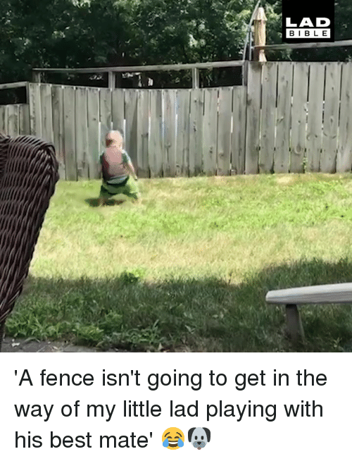 Dank, Best, and Bible: LAD  BIBLE 'A fence isn't going to get in the way of my little lad playing with his best mate' 😂🐶