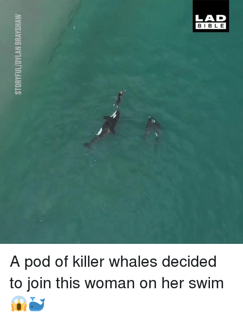 Dank, Killer Whales, and Bible: LAD  BIBLE A pod of killer whales decided to join this woman on her swim 😱🐳