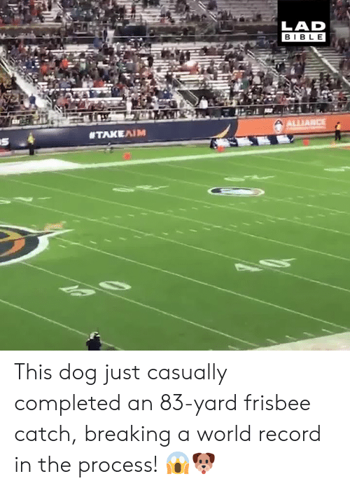 Dank, Bible, and Record: LAD  BIBLE  ALLIANCE This dog just casually completed an 83-yard frisbee catch, breaking a world record in the process! 😱🐶