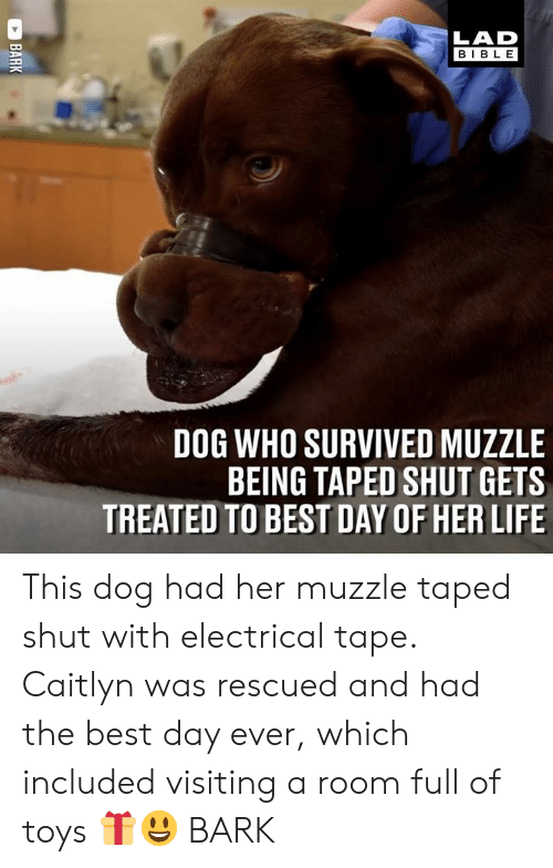 Dank, Life, and Best: LAD  BIBLE  DOG WHO SURVIVED MUZZLE  BEING TAPED SHUT GETS  TREATED TO BEST DAY OF HER LIFE This dog had her muzzle taped shut with electrical tape. Caitlyn was rescued and had the best day ever, which included visiting a room full of toys 🎁😃  BARK