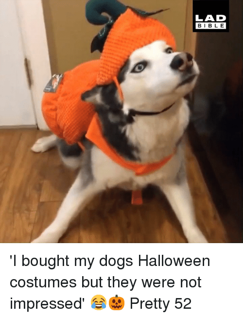 Dank, Dogs, and Halloween: LAD  BIBLE 'I bought my dogs Halloween costumes but they were not impressed' 😂🎃  Pretty 52