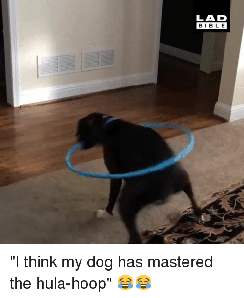 """Dank, Bible, and 🤖: LAD  BIBLE """"I think my dog has mastered the hula-hoop"""" 😂😂"""