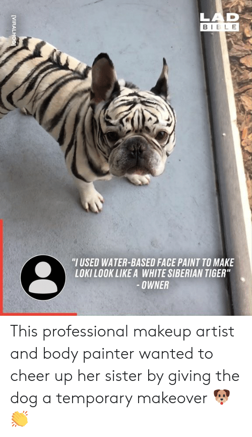 "Dank, Makeup, and Bible: LAD  BIBLE  ""I USED WATER-BASED FACE PAINT TO MAKE  LOKILOOK LIKE A WHITE SIBERIAN TIGER""  -OWNER  [VIRALHOG This professional makeup artist and body painter wanted to cheer up her sister by giving the dog a temporary makeover 🐶👏"