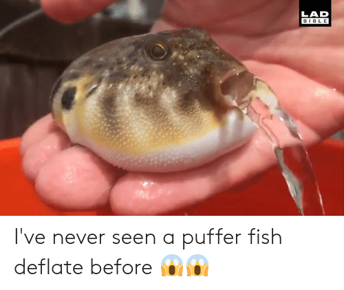 Dank, Bible, and Fish: LAD  BIBLE I've never seen a puffer fish deflate before 😱😱