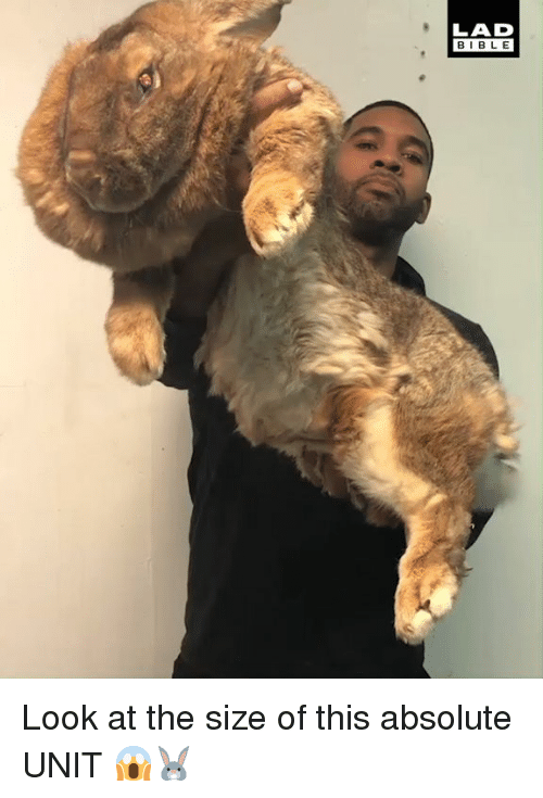 Dank, Bible, and 🤖: LAD  BIBLE Look at the size of this absolute UNIT 😱🐰