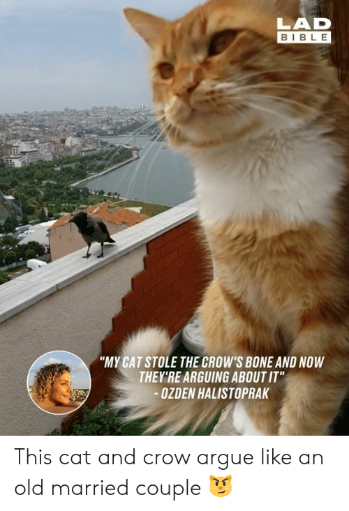 "Arguing, Dank, and Bible: LAD  BIBLE  ""MY CAT STOLE THE CROW'S BONE AND NOW  THEY'RE ARGUING ABOUT IT""  OZDEN HALISTOPRAK This cat and crow argue like an old married couple 😼"