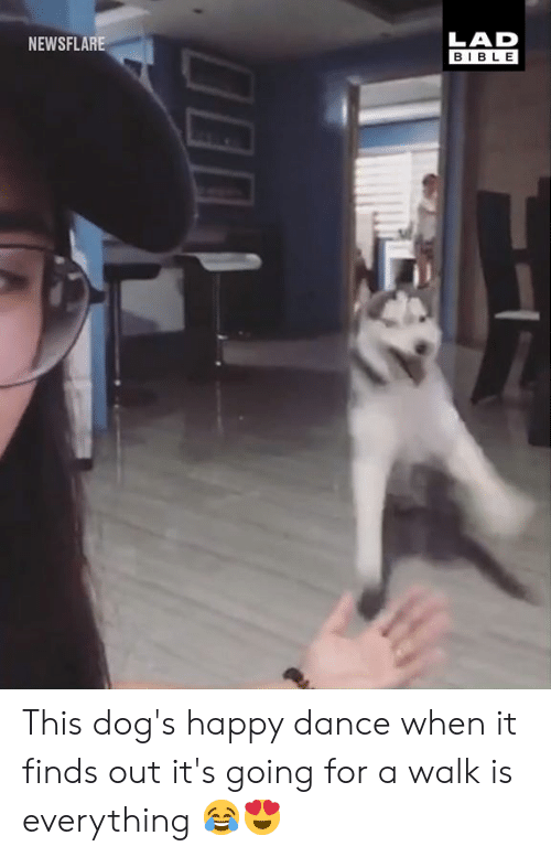 Dank, Dogs, and Bible: LAD  BIBLE  NEWSFLARE This dog's happy dance when it finds out it's going for a walk is everything 😂😍