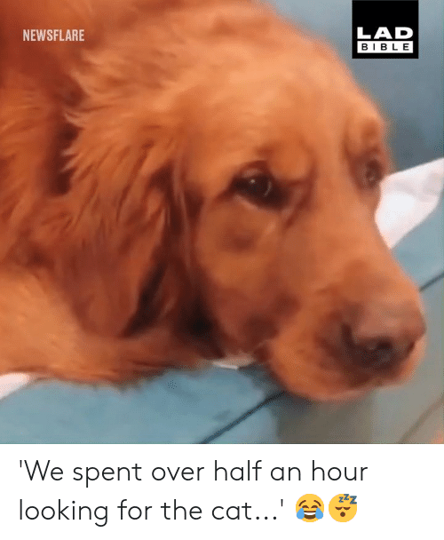 Dank, Bible, and 🤖: LAD  BIBLE  NEWSFLARE 'We spent over half an hour looking for the cat...' 😂😴