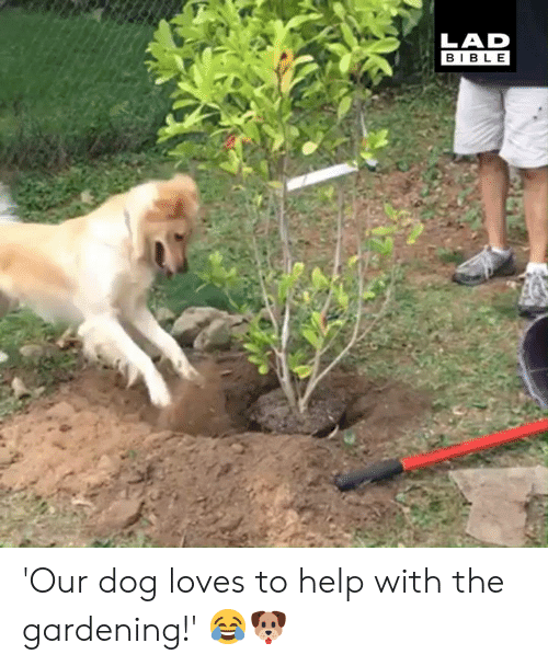 Dank, Bible, and Help: LAD  BIBLE 'Our dog loves to help with the gardening!' 😂🐶