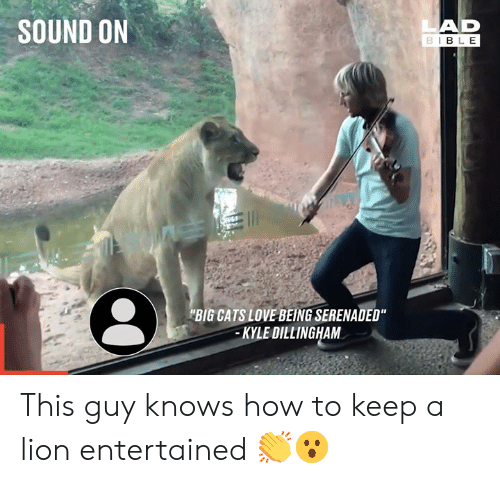 """Cats, Dank, and Love: LAD  BIBLE  SOUND ON  BIG CATS LOVE BEING SERENADED""""  KYLE DILLINGHAM This guy knows how to keep a lion entertained 👏😮"""