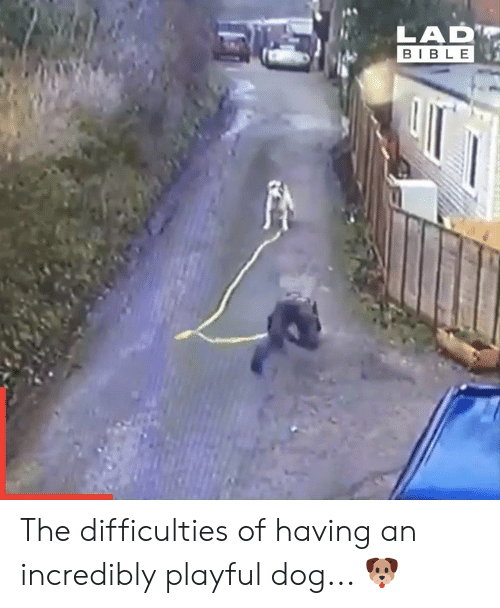 Dank, Bible, and 🤖: LAD  BIBLE The difficulties of having an incredibly playful dog... 🐶